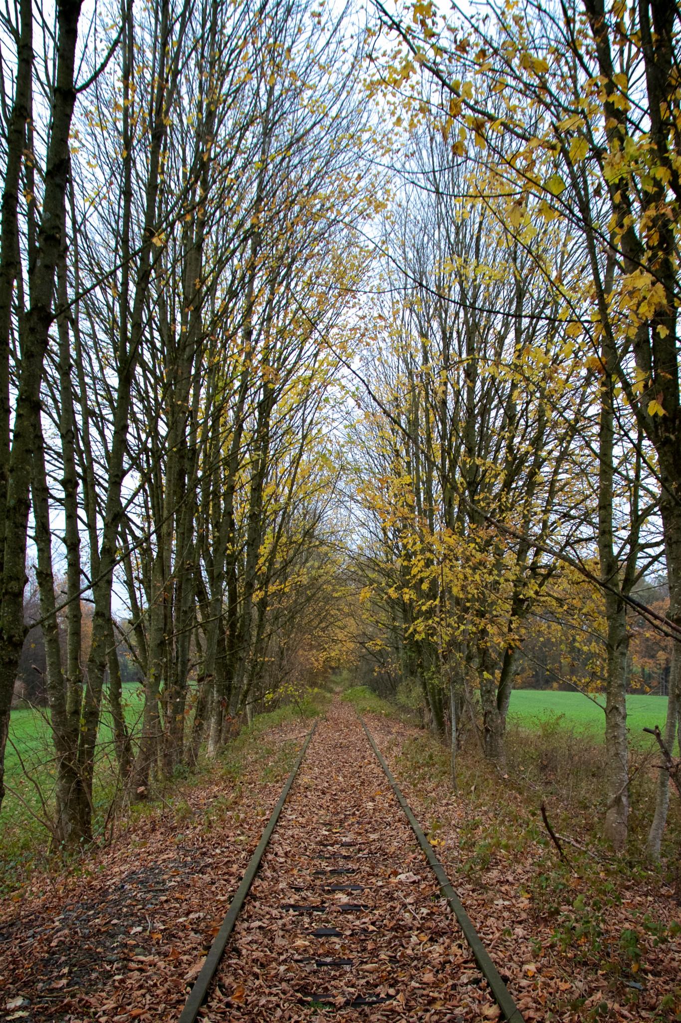 Streckendetail zwischen Reitmehring und Gaberseer Graben