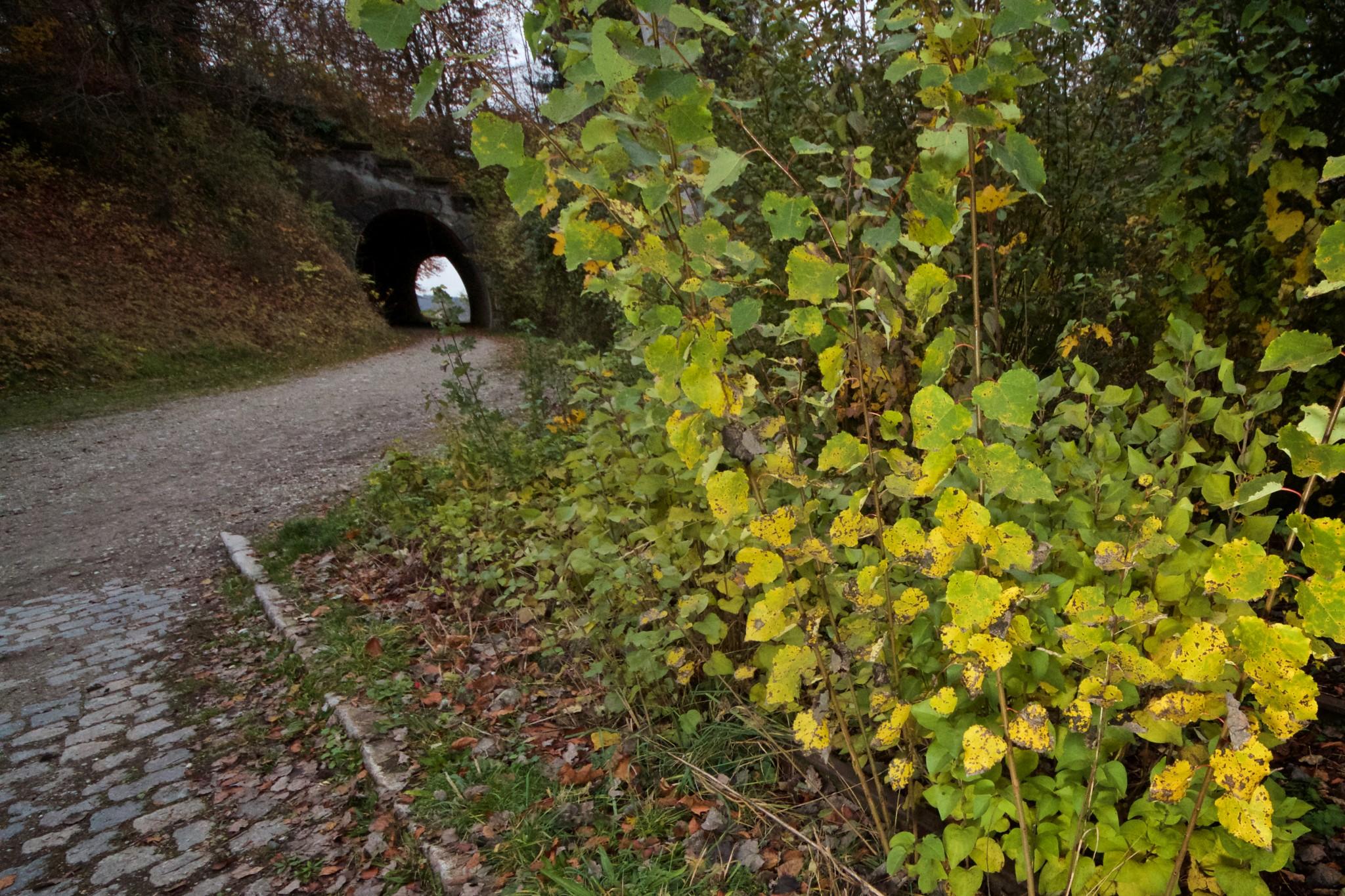 Bahntunnel Wasserburg